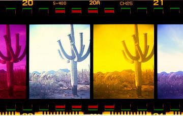 Desert Quest